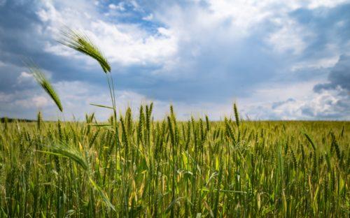 agriculture-clouds-crop-221016-jpg